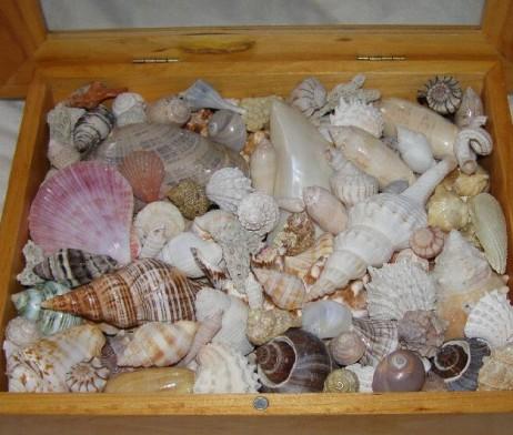 Sea Shells Mixed Bag Worldwide