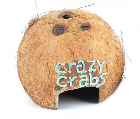 Scruffy Coconut Hut (Natural)