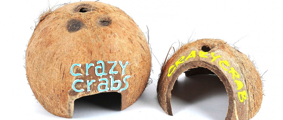 Scruffy Coconut Huts